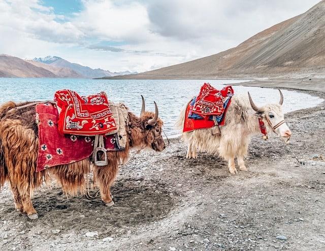 Ladakh - Dream places to visit in India