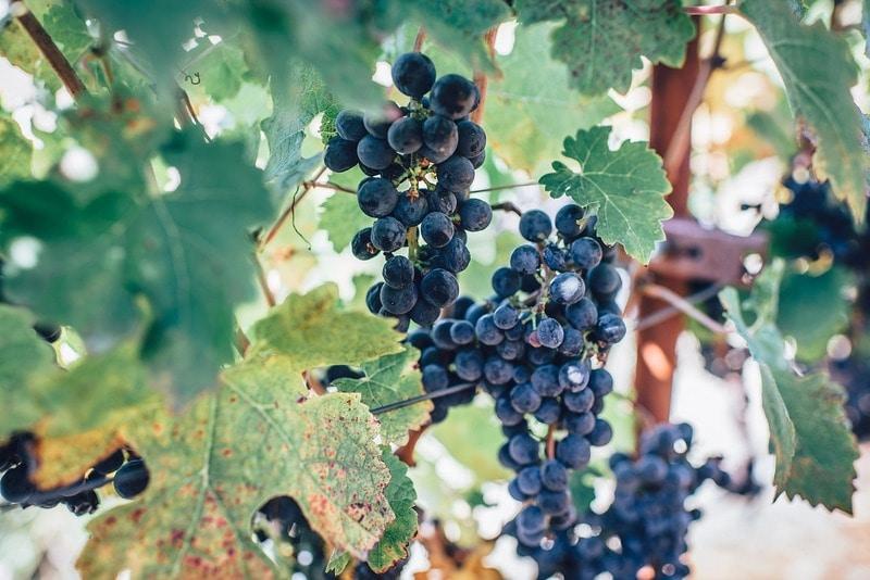 Bordeaux Wine Tours - Day Tours from Paris