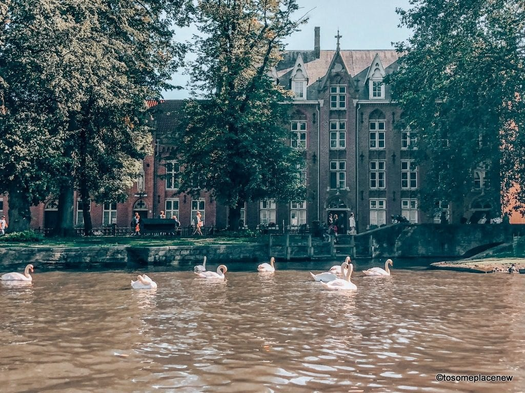 Swans in Bruges Canals Get ready to be mesmerized by gingerbread houses, medieval Markt Square, romantic canal tour, Belgian waffles and beer tour in one day in Bruges Itinerary.