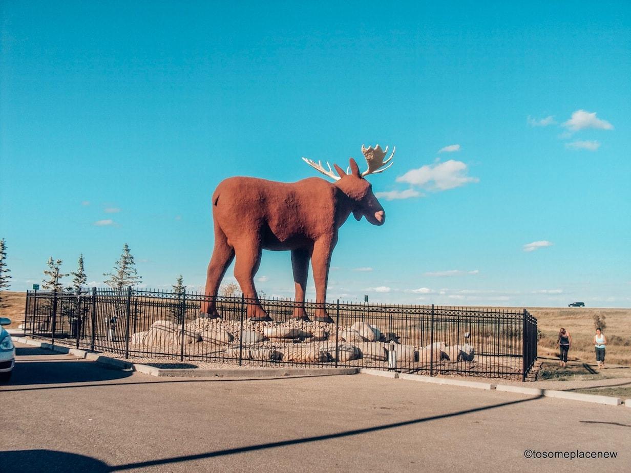 Mac the Moose Moose Attractions