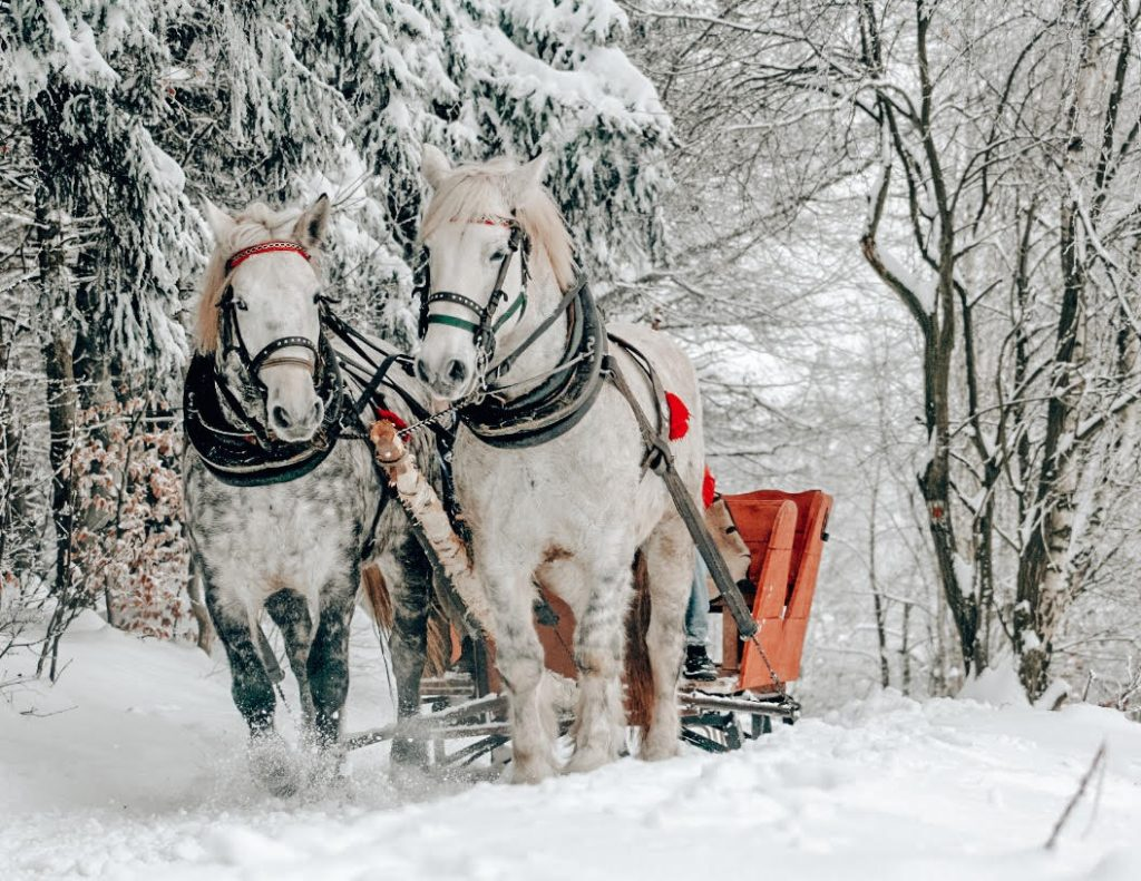 Horse Sleighing Winter in Zakopane Winter - Best Winter Destinations in Europe