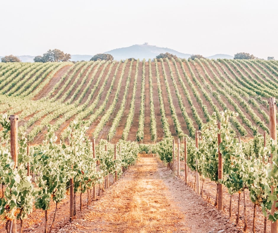 Wine Valley best day trips from Lisbon