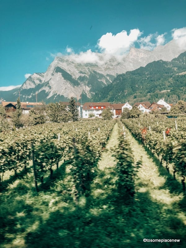 Vineyards in and around Vaduz
