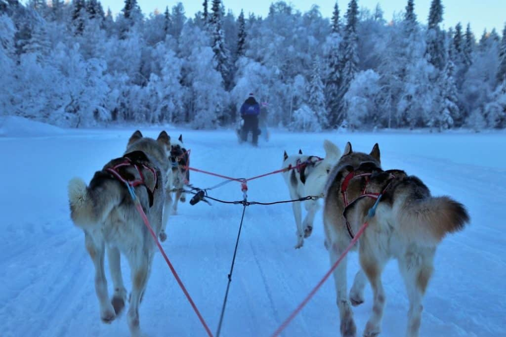 European winters - Lapland