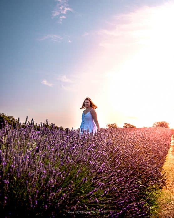 Mayfield Lavender Farms