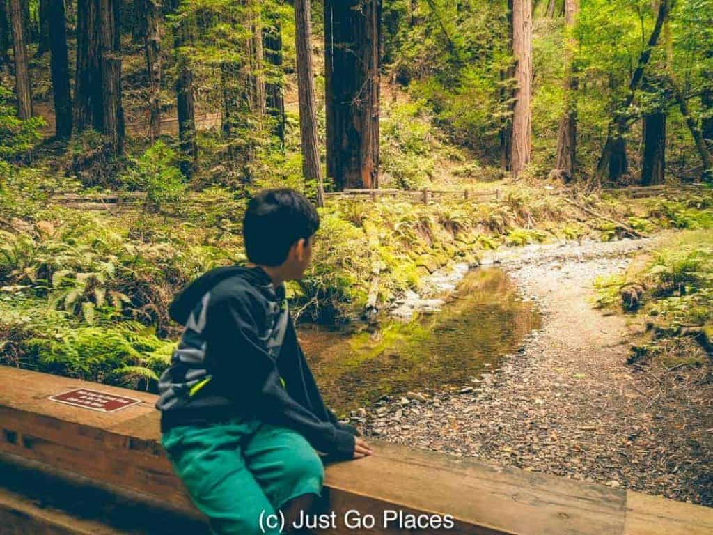 Muir Woods Road Trips from San Francisco