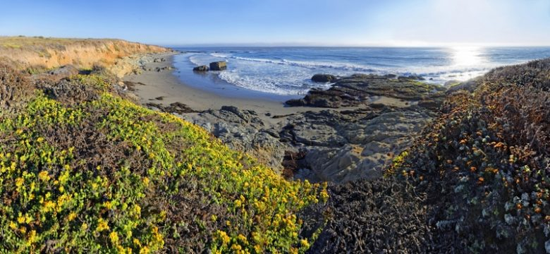 Pacific beach overgrown with mosses and lichen near Cambria, California, United States, North America