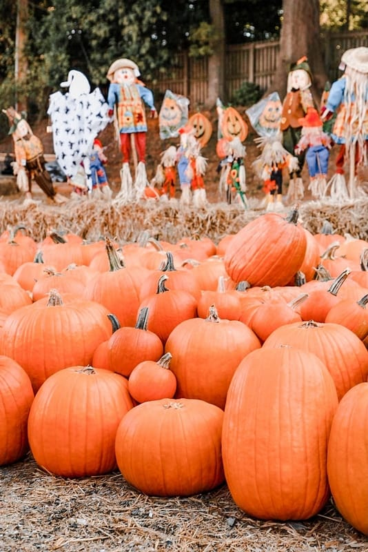 Discover the Best Fall Vacations in the US