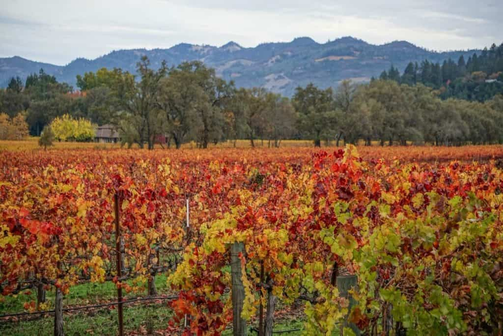 Napa Valley vineyards in fall