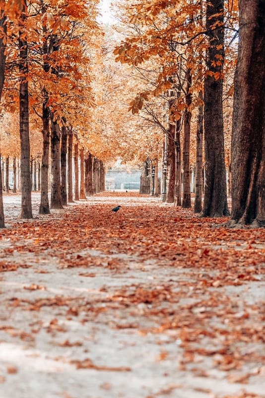 Autumn in Paris. Garden Tuileries. Scenic view of the autumn park with fallen leaves